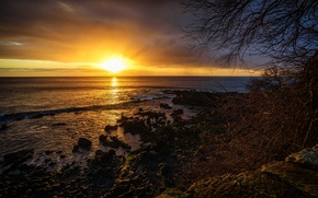 Picture sea, the sky, clouds, sunset, branches, stones, coast, horizon