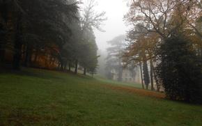 Picture trees, nature, Fog, Autumn, Trees, Autumn, Fog, Trees