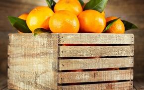Picture oranges, fruit, box