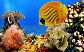 Picture sea, fish, algae, the bottom