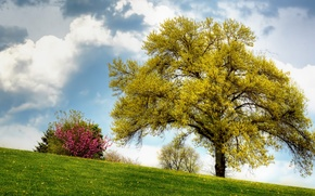 Picture field, summer, the sky, grass, clouds, tree, slope, dandelions, the bushes