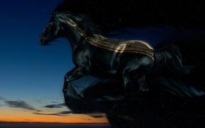 Wallpaper the evening, night, Horse
