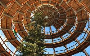 Picture tree, Germany, Bayern, the dome, Neuschönau