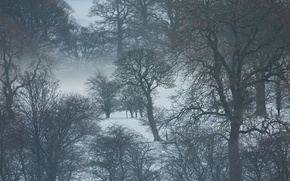 Picture trees, winter, snow, fog, branches, mist