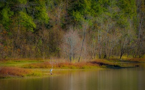 Picture autumn, forest, trees, lake, pond, bird