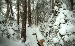 Picture Winter, Snow, Forest, Trail, Frost, Winter, Snow, Forest, Path, Wood