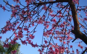 Picture tree, spring, flowering, trees, Spring, blossoms, flowering