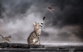 Picture water, lake, photomanipulation, Cats, Fishes, Surrealism