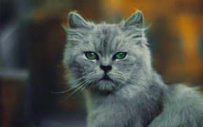 Picture summer, cat, portrait