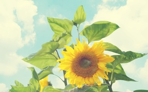 Picture leaves, clouds, sunflower, deviantart, bo0xVn