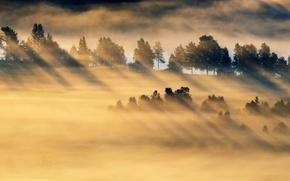 Picture field, light, fog, morning