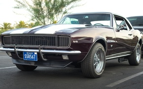 Picture Camaro, 1967, the front