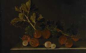 Picture berries, picture, still life, Adrian Coort, Sprig of Gooseberries on a Stone Pedestal