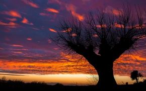 Picture the sky, clouds, tree, the evening, silhouette, glow