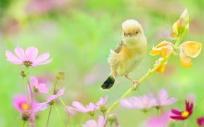 Picture summer, flowers, nature, bird, kosmeya