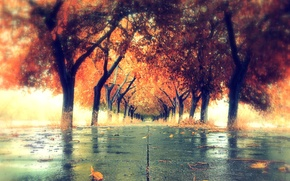 Picture autumn, the city, color, Orica
