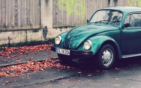 Picture leaves, wall, street, Beetle, emerald