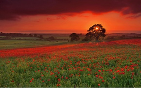 Wallpaper the sun, trees, sunset, bright, Maki, Field, the evening