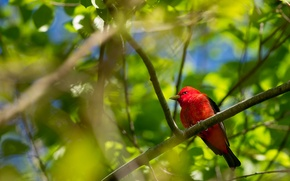Picture leaves, trees, bird, color, branch, feathers, beak