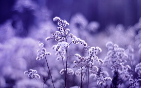 Wallpaper flowers, macro, plants, the dried flowers, purple, lilac, color, blur, plant, glare