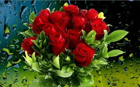 Picture drops, flowers, Rosa, background, rain, bouquet, Roses, cover, scarlet