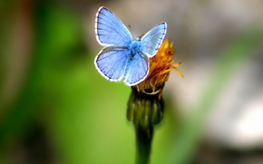 Picture greens, flower, Butterfly