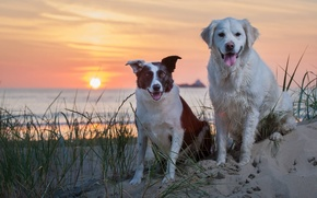 Picture sand, sea, dogs, sunset
