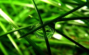 Picture grass, macro, drop