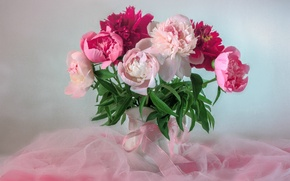Picture pink, tenderness, bouquet, peonies