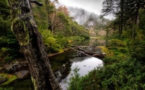 Picture Chile, Huerquehue National Park, Araucania