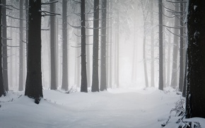 Picture road, snow, snowfall, cold, winter, frost, trees, road, trunks, tree, winter wallpapers, clearing, winter nature, ...