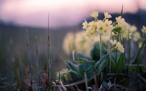Picture grass, sunset, flowers