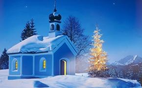 Wallpaper winter, night, tree