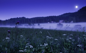 Picture Flowers, Home, Field, Fog, Grass, The moon, Forest, Light