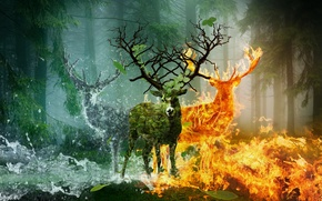 Picture Water, Fire, Animals, Deer, Fiction, Horn earth