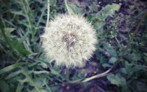 Picture white, flower, round, rich
