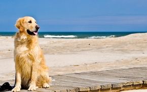 26+ Wallpaper Puppies At The Beach Background