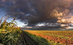 Picture clouds, Field, corn