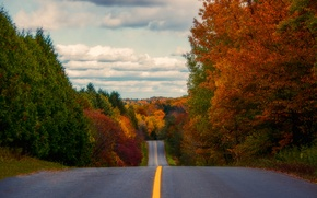 Wallpaper the sky, forest, road, trees, autumn, clouds