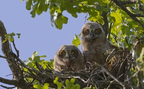 Picture Tree, morning, owls