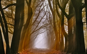 Wallpaper rays, light, trees, nature, alley
