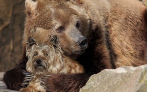Picture dog, rocks, friends, Bear