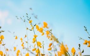 Wallpaper flowers, yellow, petals