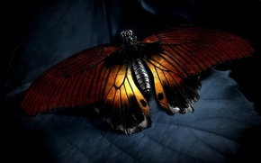 Picture light, sheet, Butterfly