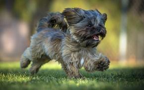 Picture dog, running, puppy, walk