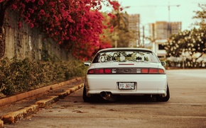 Picture flowers, tuning, back, white, Silvia, Nissan, white, Nissan, Sylvia, S14, stance