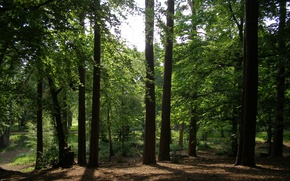 Picture forest, summer, trees, green, trail, forest, trees, Summer, path