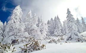 Wallpaper winter, forest, the sky, snow, nature
