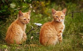 Wallpaper cat, red, pair