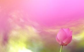 Wallpaper nature, background, petals, Lotus